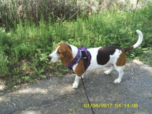 Walking Leroy In The Valley — Pilot
