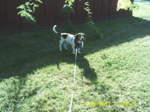 Walking Leroy in the Valley — Episode 14 (abridged)