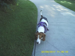 Walking Leroy in the Valley — Episode 15 (abridged)